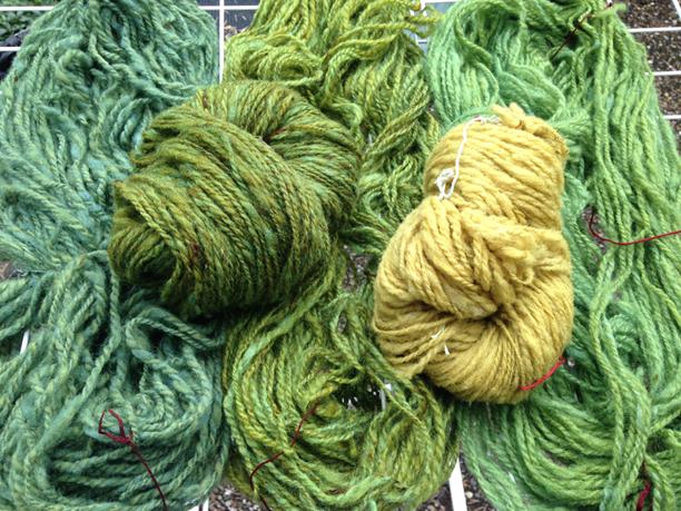 Groene wol door verven met rode rietpluimen en indigo